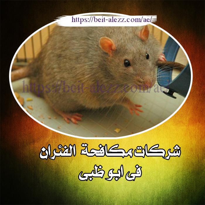 شركة مكافحة الفئران في أبوظبي