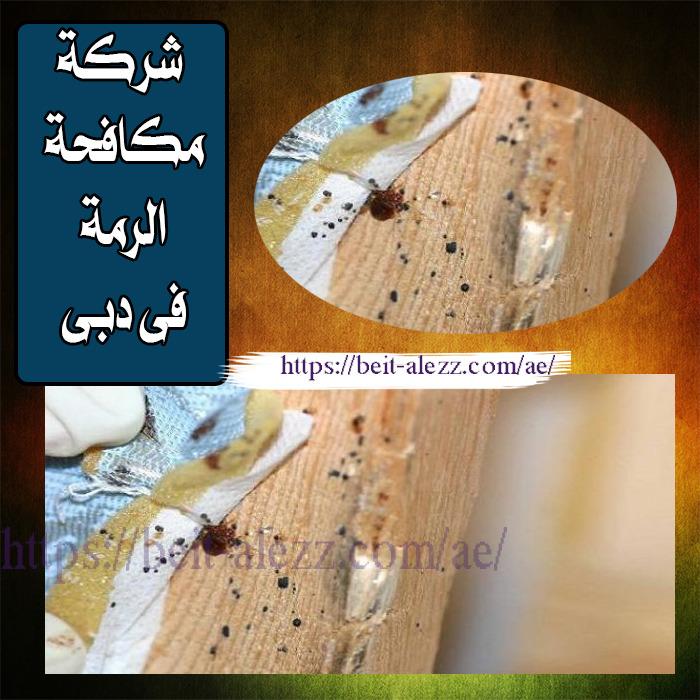 شركة مكافحة الرمة في دبى