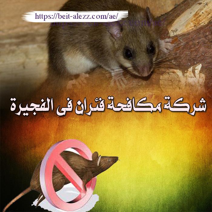 شركة مكافحة فئران في الفجيرة