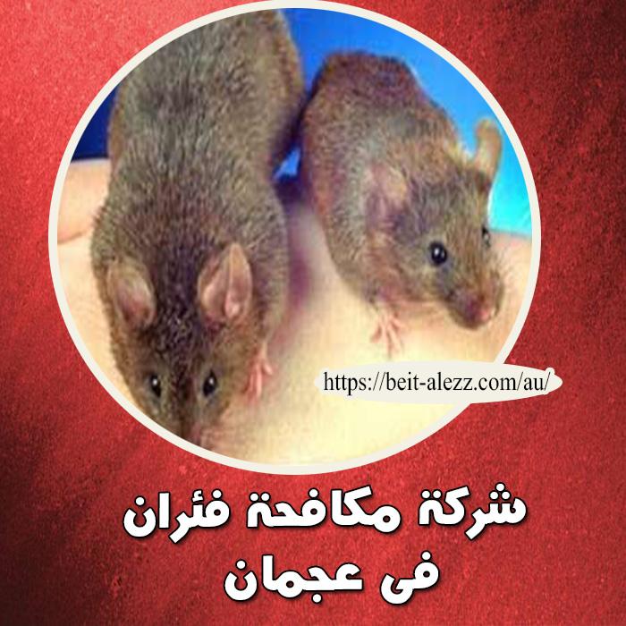 شركة مكافحة فئران في عجمان