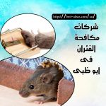 شركات مكافحة الفئران أبو ظبي  0501175141