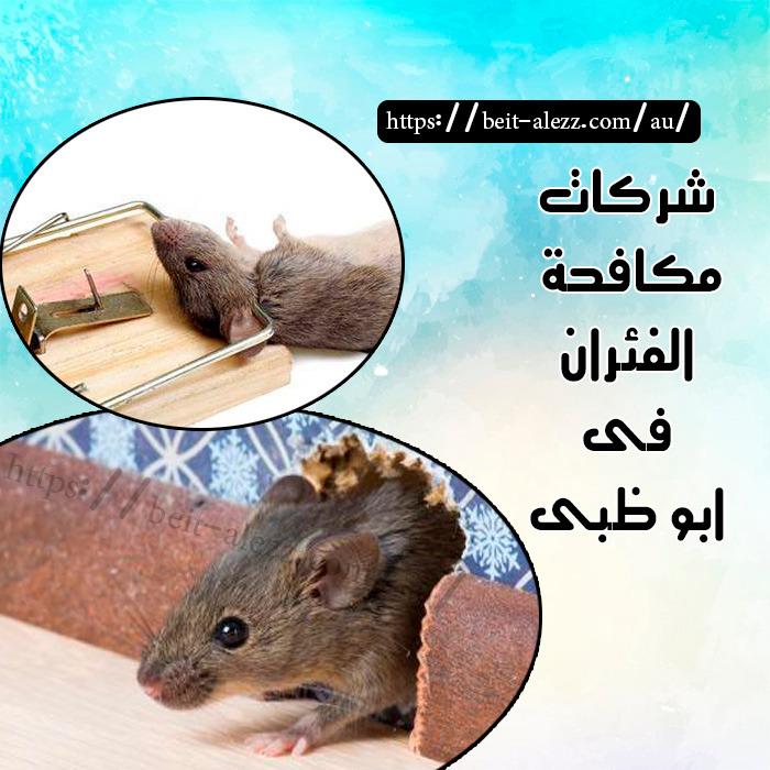 شركات مكافحة الفئران أبو ظبي