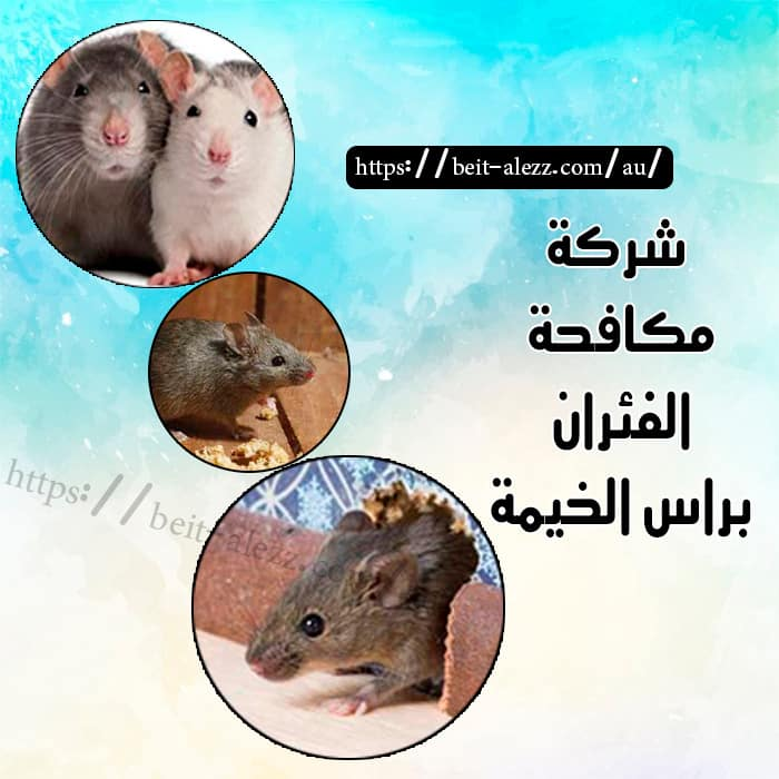 شركة مكافحة الفئران برا س الخيمة
