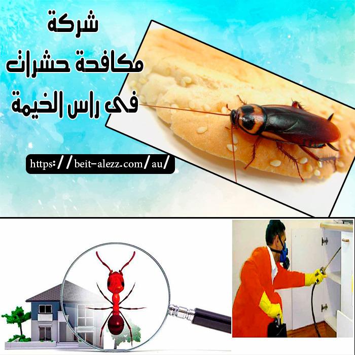 شركة مكافحة حشرات في راس الخيمة